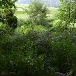 aux beaux (?) jours, le jardin