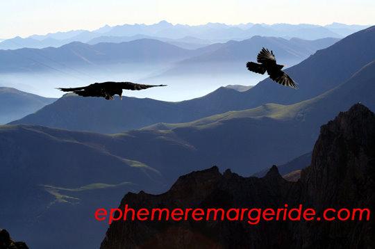 Les corbeaux Rimbaud