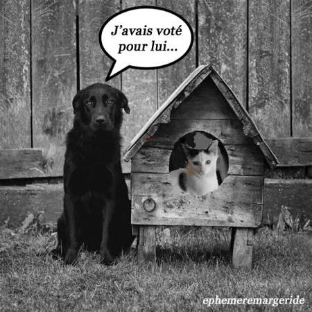 Elections humour ephemeremargeride